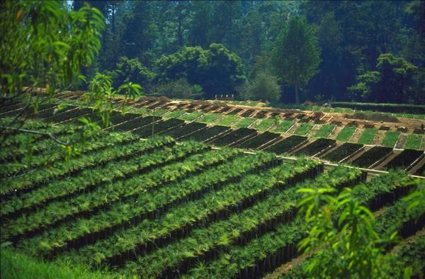 FSC сретифицирани гори
