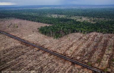 Greenpeace призова към бойкот на индонезийския производител на хартия APRIL