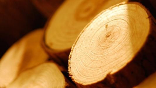Нов стандарт за проверка на източниците на продукти от дървесина